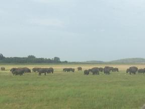 Herd of Elephant in Sri Lanka