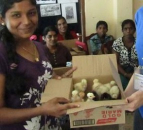 Support a family in Sri Lanka by buying goats and chickens for them